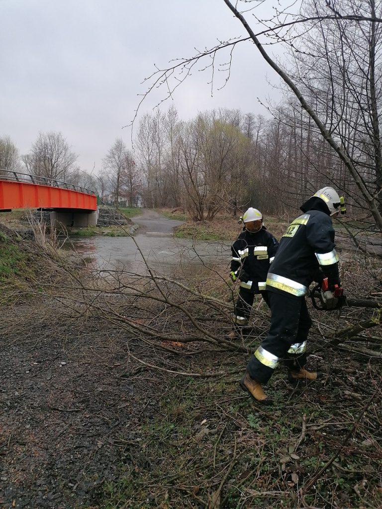 Strażacy usuwają powalone drzewa