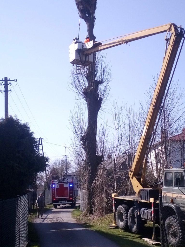 Strażacy obcinają gałęzie wokół bocianiego gniazda
