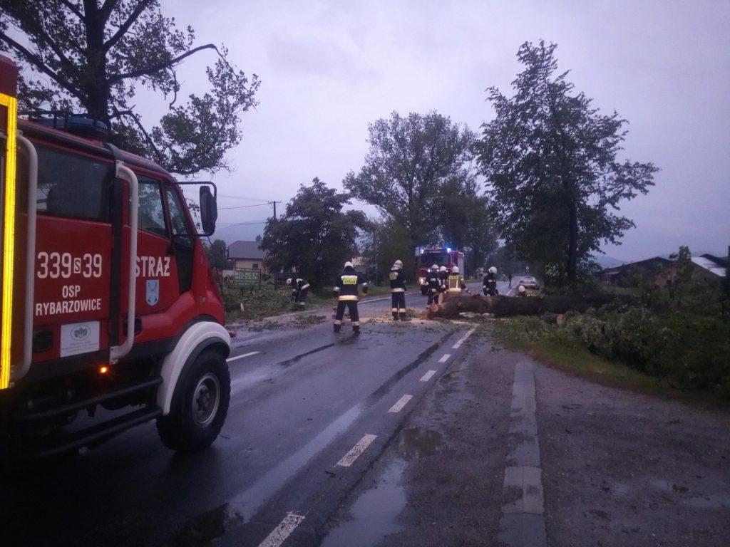 Interwencja strażaków przy powalonym drzewie